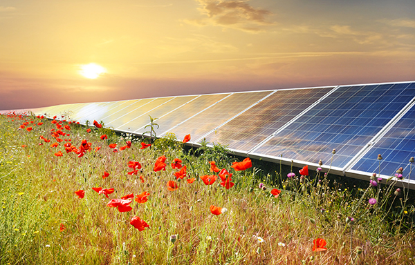 Turn Your Crop Land into Solar Farms – More Money, Less Effort